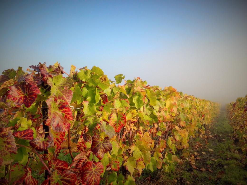 champagne-christophe-michel-brouillard